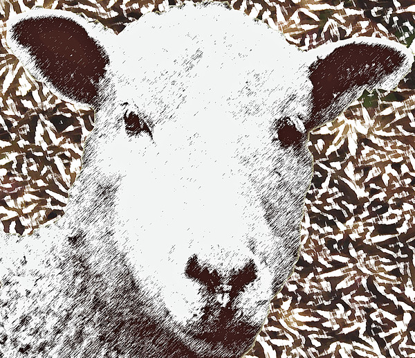 Eyes Upon Ewe by Rodger Mansfield